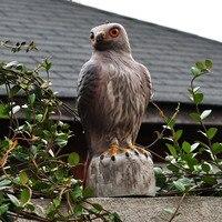 Plastic Hawk Hunting Decoys Garden Bird Deter Scarer Scarecrow Mice Pest Control Deterrent Repeller Decor For Bird Repeller