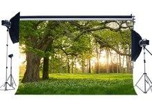 الربيع خلفية الغابة الغابات الخلفيات الأشجار الأخضر العشب مرج الزهور الطازجة طبيعة التصوير خلفية