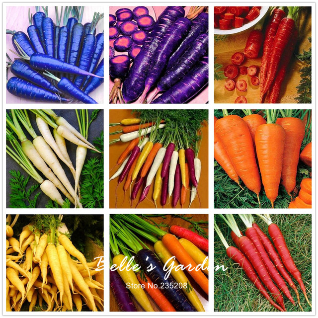 100pcs Carrot Seeds Red Blue Yellow Rainbow Seeds Vegetables Plants