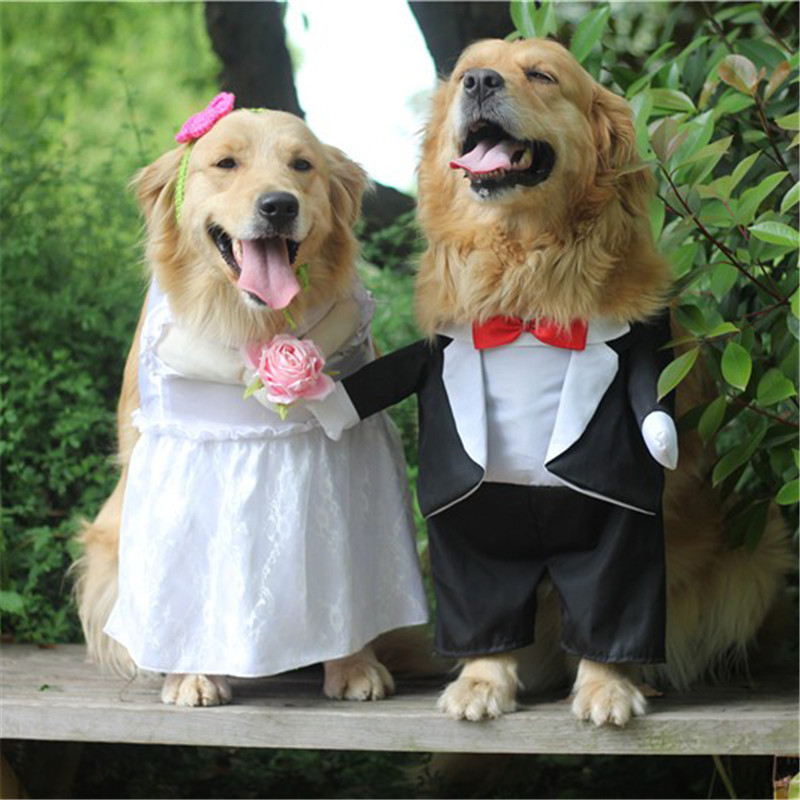 Dog Costume For Wedding Party (2)