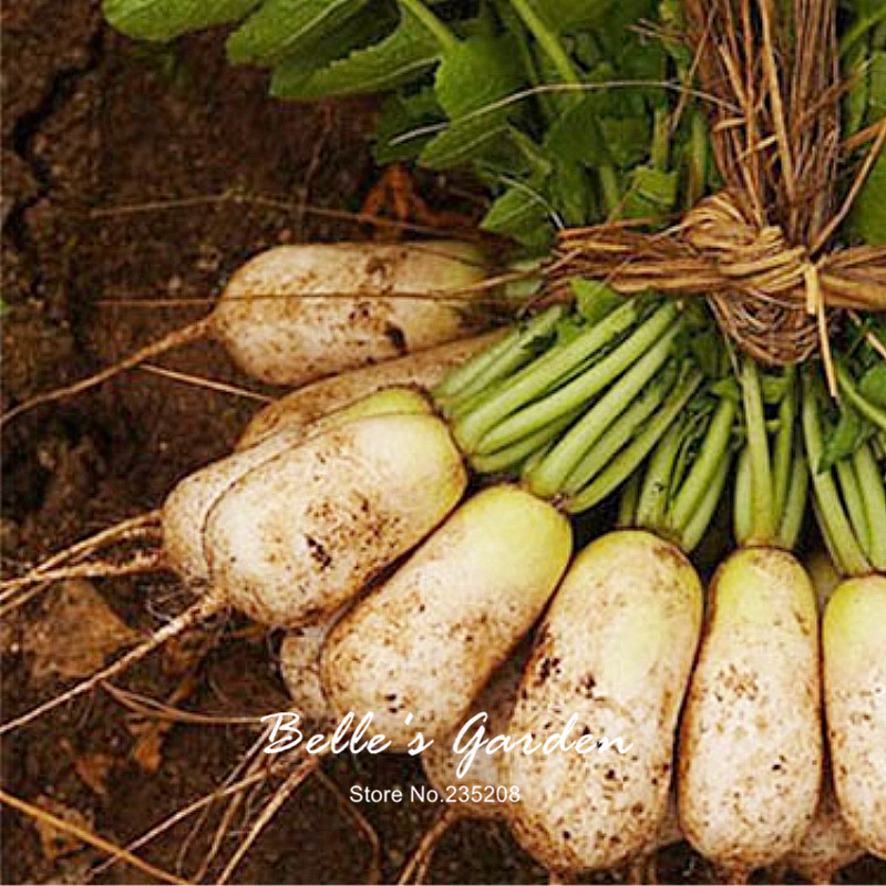200pcs Hot Selling Formosa Giant Luo Buo Radish Seeds Favorite White Oganic Radish Home Garden Fruit Vegetable Seeds