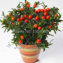 Free shipping 20 Jerusalemcherry Bonsai Seeds, easy growing, rare ,beautiful, DIY Balcony or Window Plant