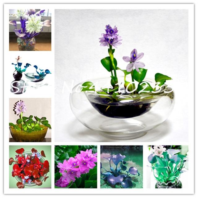 Caliente 50 unids/bolsa bonsái agua Hyacinth plantas de flores Lotus nuevo Agua Viva Hyacinth estanque flotante acuario Lotus fisidens Fontanus