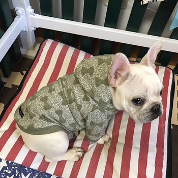Small Soft Dog Clothes Fleece French Bulldog  Hoodie Blue Green Pugs Poodle Dog Sweatshirt Honden Jas Pet Costume Clothing 50WY6 french bulldog