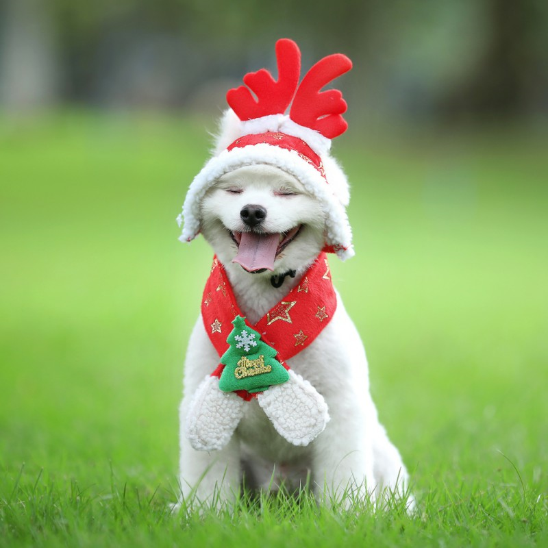 Dog Cat Pet Santa Hat Scarf And Collar Bow Tie Christmas Costume For Puppy Kitten Small Cats Dogs Pets