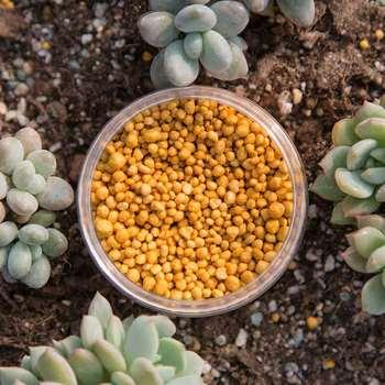 Wolno uwalniający orchidea granulowany nawóz NPK soczysty kwiat nawóz roślinny tanie i dobre opinie Nawóz wieloskładnikowy Plant Fertilizer Powolne Granulowane