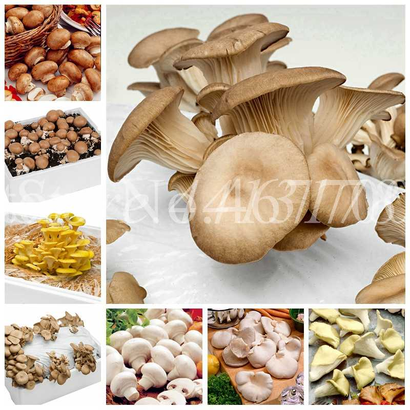 500 pcs Delicious Green Giant Mushroom Bonsai, Organic Vegetable Indoor Succulent Potted Plant in Garden & Courtyard Easy Grow