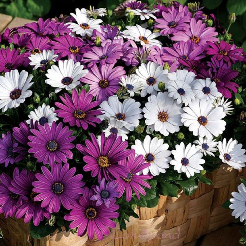afrique du sud fleurs-achetez des lots à petit prix afrique du sud