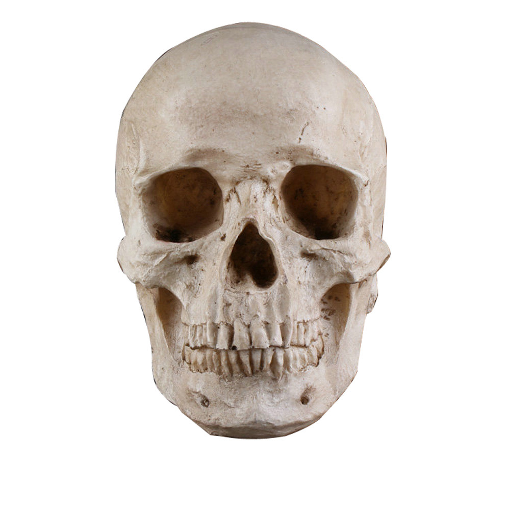 Halloween skull decorations - New Arrived Human Skull Halloween Decoration Ornament Model A Really Eerie Halloween Decoration Fontes Do Dia