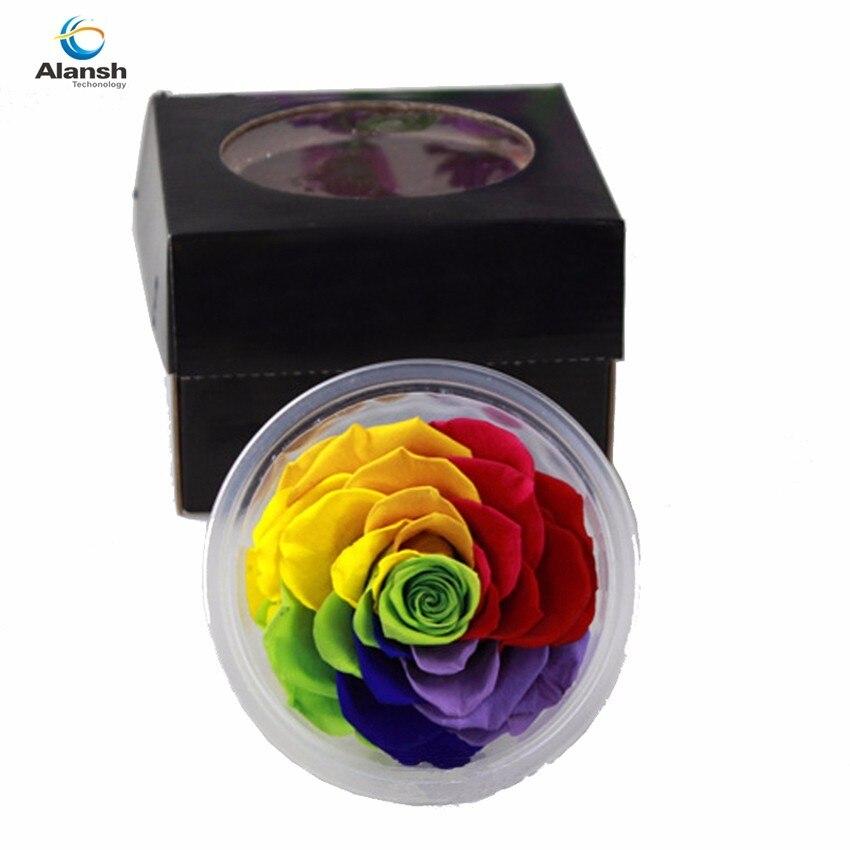 Favoloso FAI DA TE decorazione della Vita Eterna Conservazione Gigante Rose  BQ65