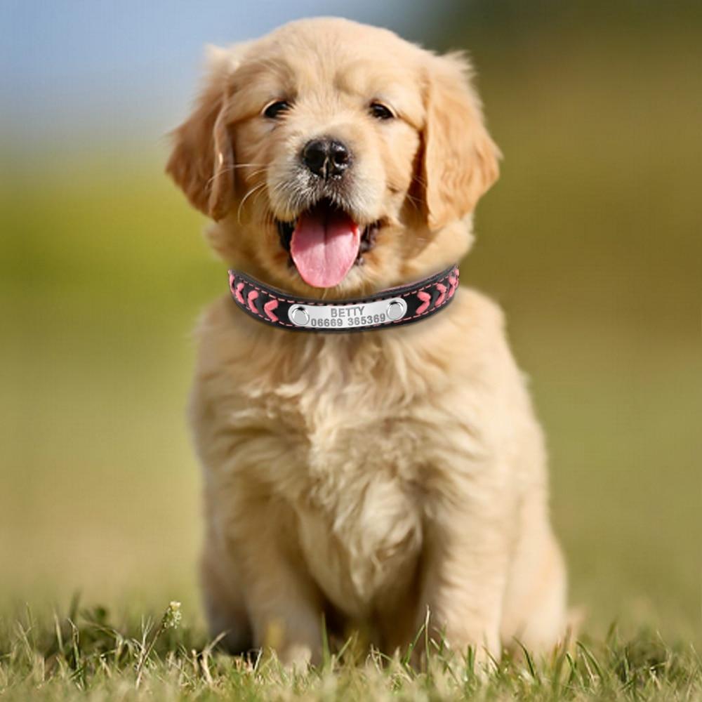 HTB1MuX3RVXXXXXuXpXXq6xXFXXX6 - Halsband hond met naam en telefoonnummer leer gevlochten