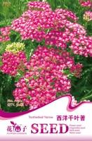1 Original Pack 50 Seeds / Pack Toothedleaf yarrow seeds, garden or cut flower seeds
