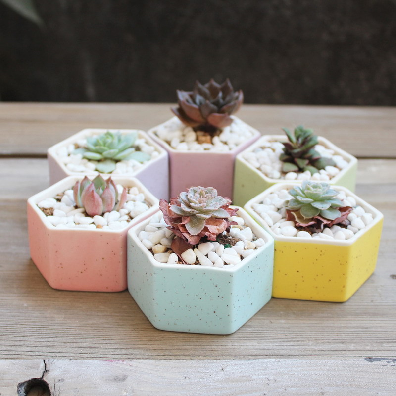6pcs/lot Mini rainbow hexagon shape ceramic flowerpot colourful succulent planter pot home desktop decor indoor pottery bonsai