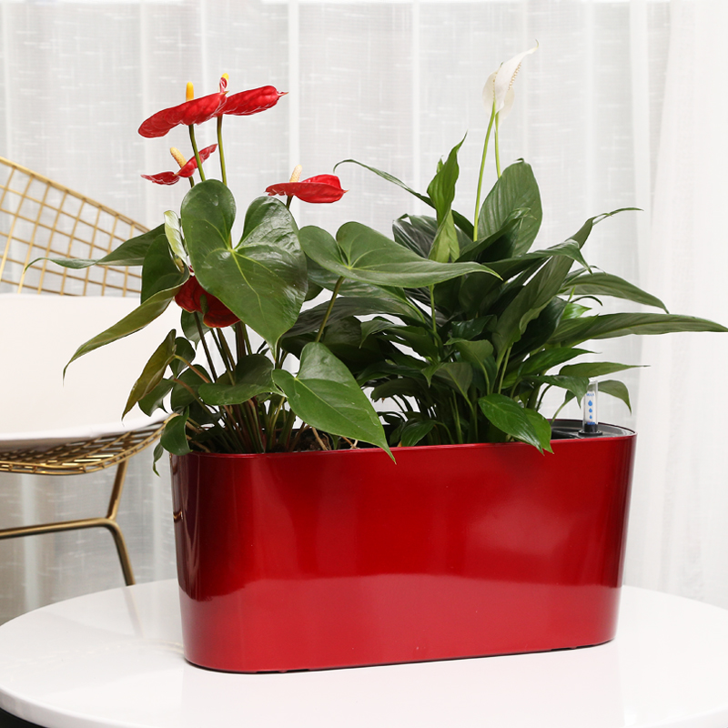 Cube Lazy Self - Absorbent Water Visual Creative Personality Paint Plastic Flower Pot For Home And Garden