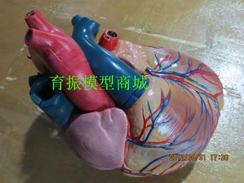 heart model large size heart model high quality human body model large model 3 times larger than normal size