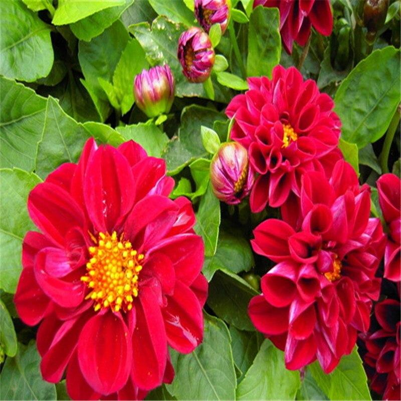 achetez en gros grande fleur rouge en ligne à des grossistes
