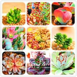 Time limit 10pcs bag 99 kinds to choose lithops seeds succulents seeds pseudotruncatella office bonsai flower.jpg 250x250