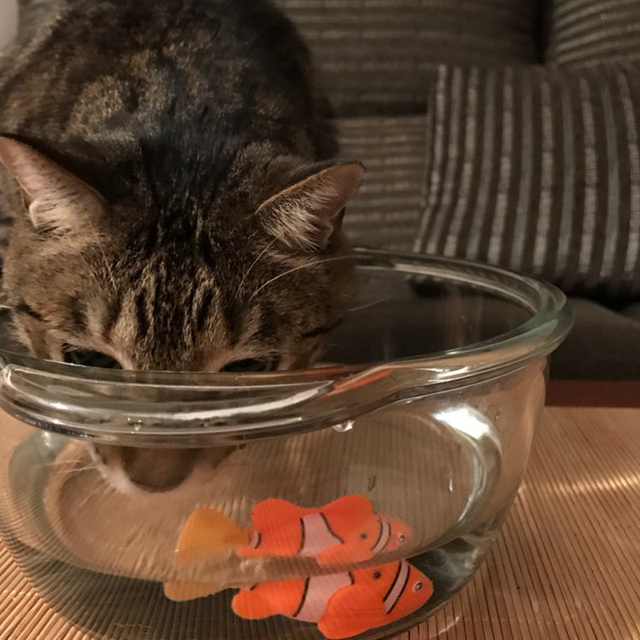 Battery-Powered Fish Cat Toy