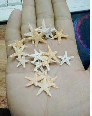 Freeshipping hot 300pcs/lot 1-3cm Natural Artificial Starfish Platform Ornament Accessories wedding decoration
