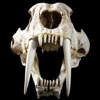 High precision Resin Model Interior Decoration Props for Simulation Exhibition of Skulls of Saber toothed Tiger Skulls