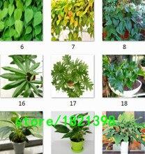 100% Подлинные Редкие 100 шт. 10 видов mix Филодендрон семена, виноградные листья, комнатных растений Анти Излучения Поглощают пыль семена деревьев