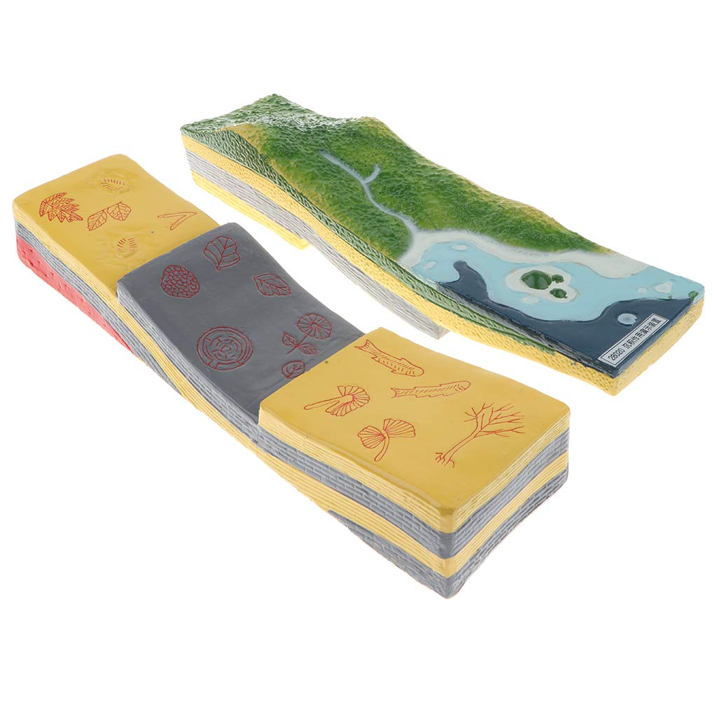 3D Geographical Tectonic Plate Model Scientific Sedimentation Model For School Teaching Material Learning Display