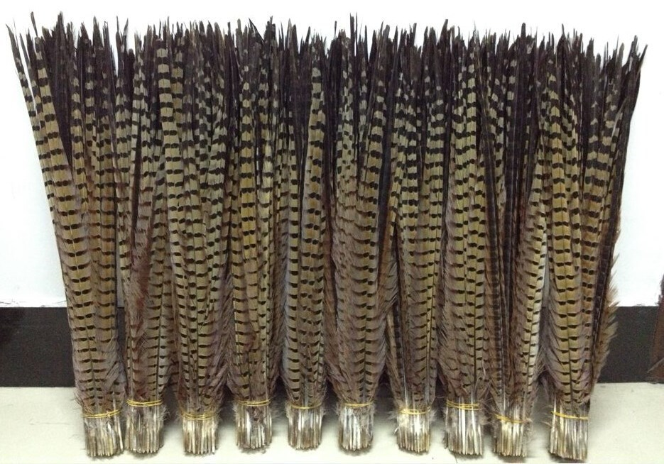 100pcs Lot Natural Ring Neck Pheasant Tail Feathers 20 22 LONG Fly Craft for party stage
