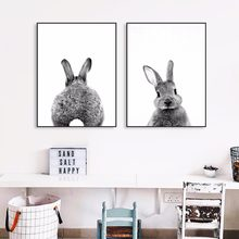 Fat Rabbit Photo Artwork Painting Poster Print Decorative Wall Pictures For Living Room No Frame Home Decoration Accessories(China)