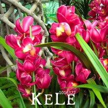 Sale!100 PCS/Bag Red Cymbidium Orchid Balcony Bonsai Seeds Bonsai Garden Flower Seeds Orchid,#7UT6E3