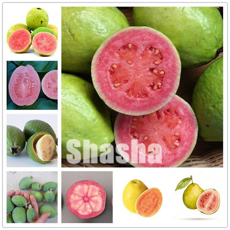 100 Pcs/Bag Guava Bonsai Delicious Tropical Fruit Bonsai Non Transgenic Plants Bonsai Fruit Tree For Home Garden Plant