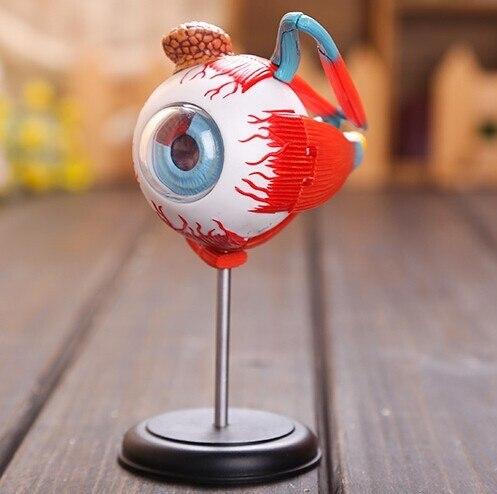 Master 4d Eye Model 32 Pcs Assembled Human Anatomy Model New 3d