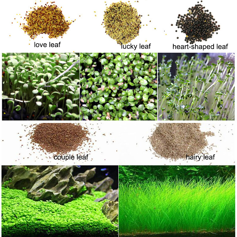 Water Grass Seed Aquarium Aquatic Plants Seeds Easy Planting Fish Tank Landscape Ornament Lawn Decor 2