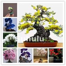 20 Pcs Mini Bonsai Tree Japanese Sakura Plant Rare Cherry Blossoms Flowers In Bonsai,Pink Prunus Serrulata For Desk, Home