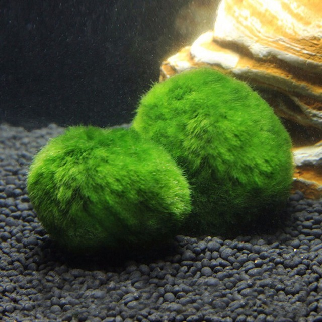 4cm Cladophora Live Aquarium Accessories Plant Fish Tank Shrimp Nano For  Marimo Moss Balls Fish Tank