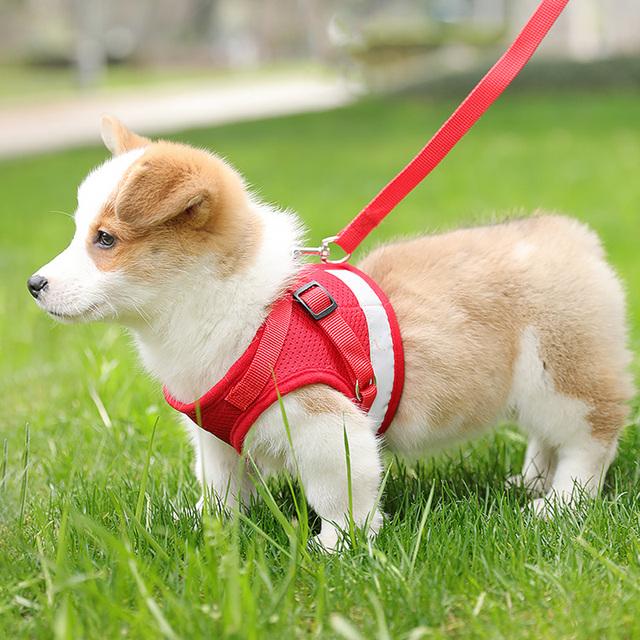Dog Chihuahua Vest Harness