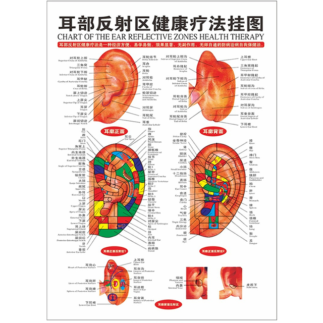 1Pc Scrapping Healthcare Human Acupuncture Wall Chart Diagram Ear