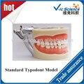 200 h Padrão Nissin Typodont Modelo com 32 pcs dentes