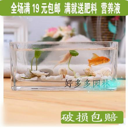 Desktop Rectangular Vase Clear Glass Vase Hydroponic Plant