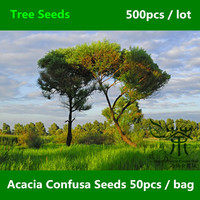 Landscape Beautifying Acacia Confusa Seeds 500pcs, Formosa Acacia Evergreen Tree Seeds, Formosan Koa Acacia Petit Feuille Seeds