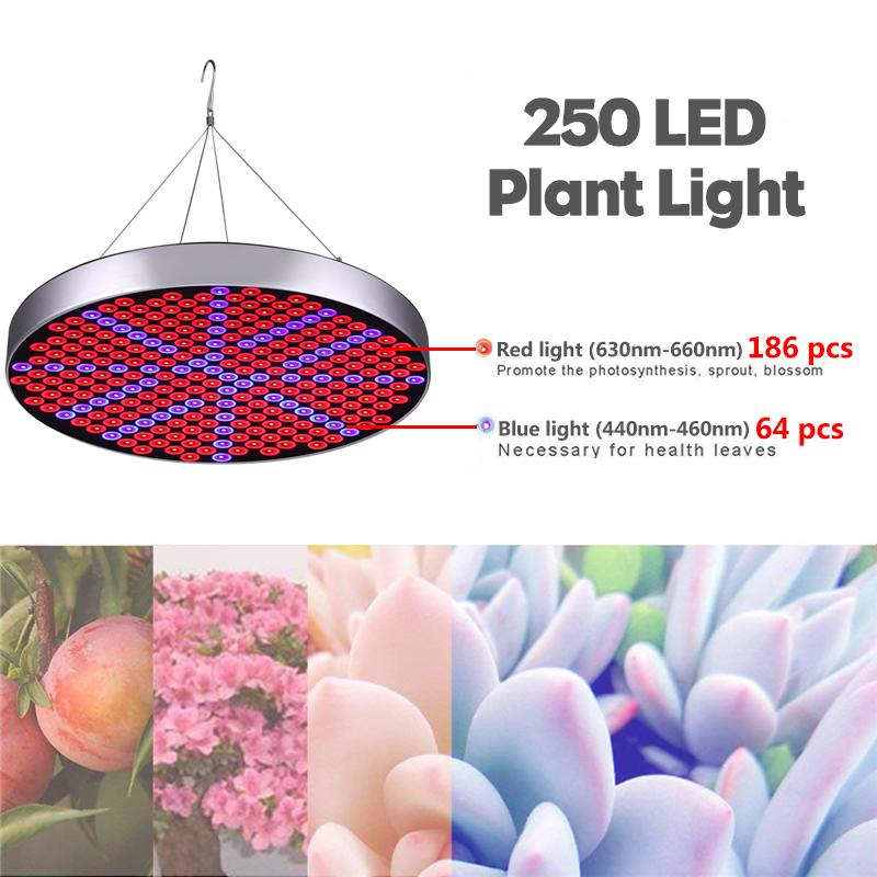 80W Growing Lamps 250pcs LED Grow Light AC85 265V Full Spectrum Plant Lighting Flower Seedling Cultivation US/UK/EU/AU Plug