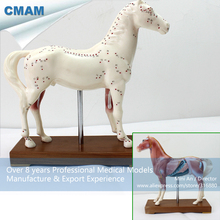 CMAM-A03 Horse Acupuncture Model,Animal Acupuncture Models for Veterinarian's Reference