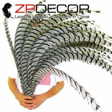 ZPDECOR 32-36inch(80-90cm)50pieces/lot Precious Natural ZEBRA Black and White Lady Amherst Pheasant Tail Feathers for Sale