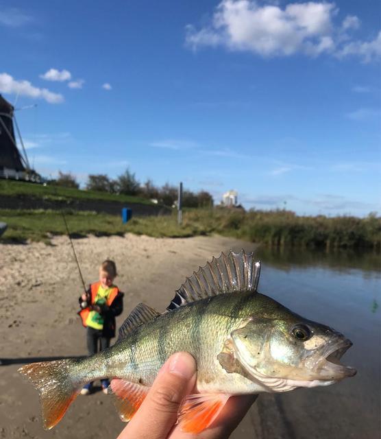 Leurre de pêche HUNTHOUSE leurre souple 8.5 cm 5.3g 5 pcs/lot appâts de pêche pour la pêche basse Wobblers Pesca leurre zander leurre pêche