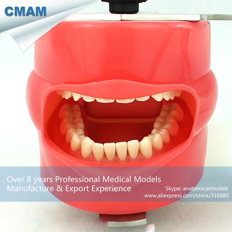 12560 CMAM-DENTAL02-1 Easy Fixing Dental Phantom Head for Dentisty Colloge, Dental Simulator Unit Teaching Head 12560 cmam dental02 1 dental phantom head simulator for oral study medical science educational dental teaching models