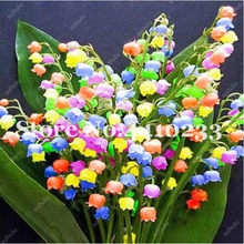 200 Pcs Lily Of The Valley Flower Bonsai Colorful Indoor Bell Orchid Flower Rich Aroma Bonsai Plant Perennial Flowers Garden(China)