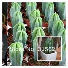 Кактус эхинопсис Tubiflora Myrtillocactus Geometrizans семена 20 шт. суккулентов для домашнего офиса балкон