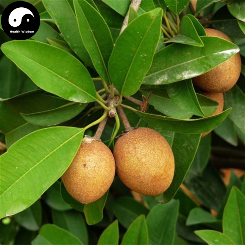 Sapodilla fruit tree