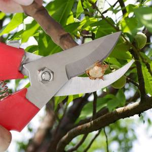 Scissors Pruning Shears Non-Slip-Spring Fruit-Tree Stainless-Steel New-Product