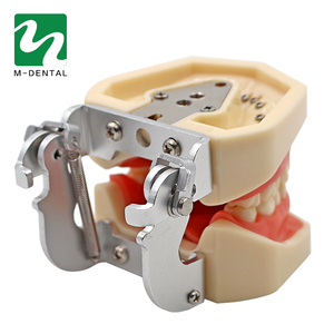 Image 4 - Modèle de dent dentaire Standard amovible avec dents de 28 pièces pour le modèle de Simulation denseignement