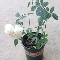 28 см завод Поддержка восхождение растения коническая трельяж поддерживающая рама сад Прямая поставка